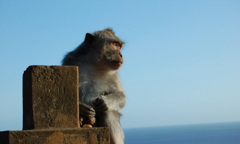 monkey-21023_1280