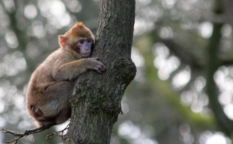 monkey-445372_1280